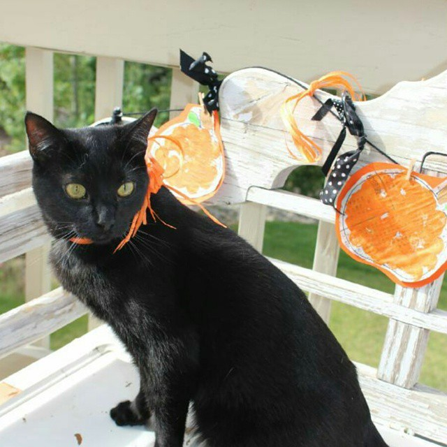 Because when you have a black cat Halloween starts nowhellip